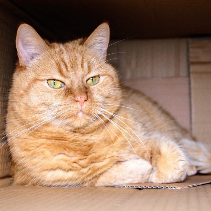 Alle Produkte für Katzen